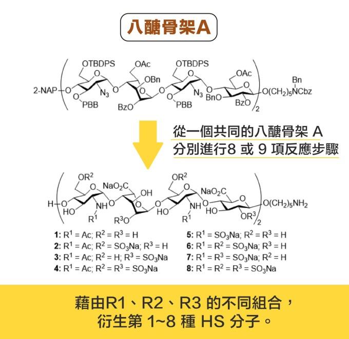 從一個共同的八醣骨架 A ,分別進行 8 或 9 項反應步驟,可以衍生出 8 種 HS 分子。 資料來源|洪上程 圖說設計|黃曉君、林洵安