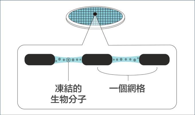 第三步:在攝氏 -190 度的低溫中,研究員進行電子顯微鏡的觀測,可保生物分子結構不受影響。 資料來源│諾貝爾獎官網 2017 化學獎冷凍電子顯微鏡簡介 圖說設計│廖英凱、林洵安