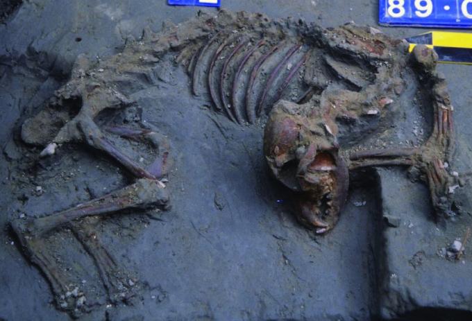 南科南關里遺址出土,大坌坑文化時期的「臺灣第一狗」,是目前臺灣最早養狗的證據。 圖片來源│南科考古隊