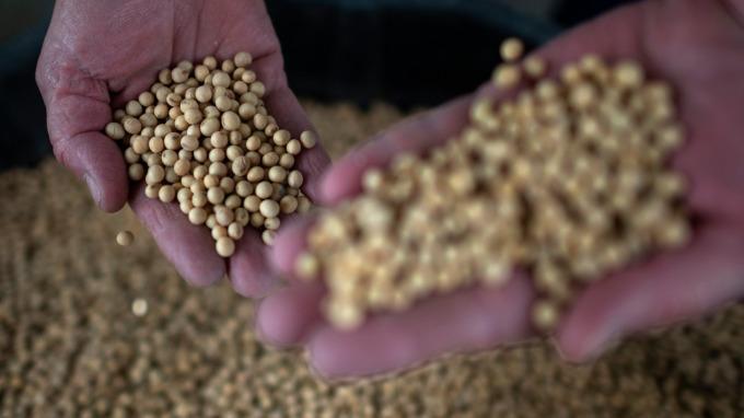 當局忙美國大豆進口免稅配額 但中國買家可能更愛巴西大豆(圖片:AFP)