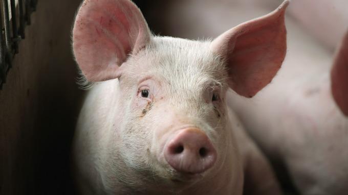 中加重修舊好?加拿大牛豬肉解禁 恢復進口中國。 (圖片:AFP)