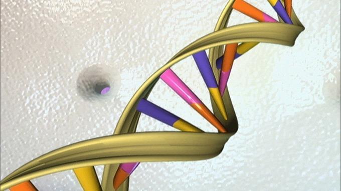 人類和香蕉真的有50%相似的DNA嗎?(圖片:AFP)