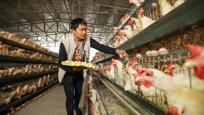 美中貿易談判進展跡象?美國農業部確認將准許中國禽肉進口(圖:AFP)