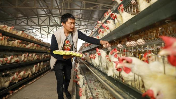 美國率先開放中國家禽進口,背後的盤算是什麼?(圖/AFP)