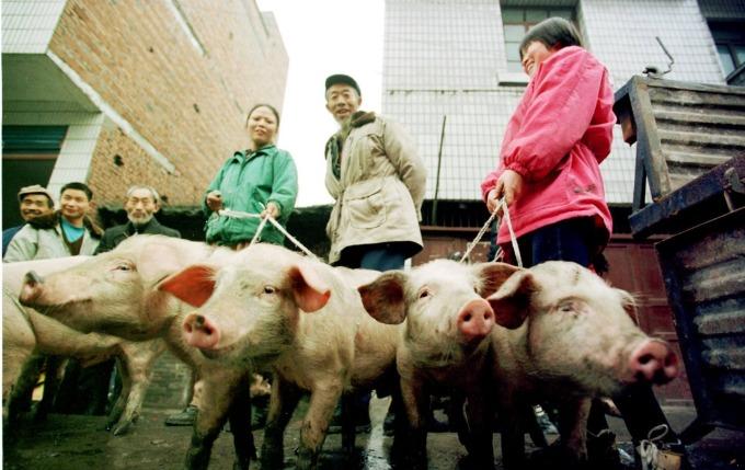 中國豬肉飆升至歷史新高 (圖片: AFP)
