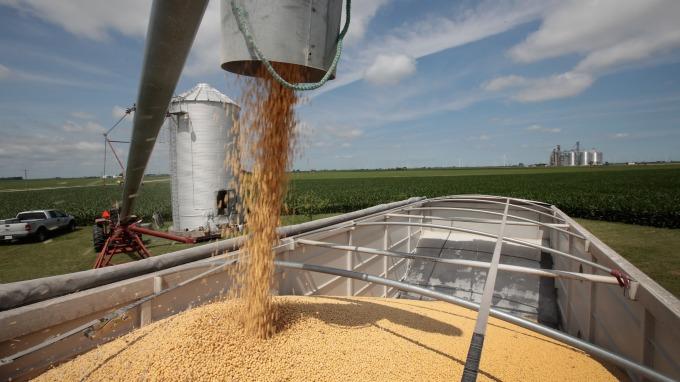 中國11月增加由美國進口黃豆 數量寫20個月新高(圖:AFP)