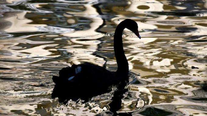疫情黑天鵝來襲,突顯提升資產配置抵抗力的重要性,無論短中長期投資布局可增持收益部位。(圖:AFP)