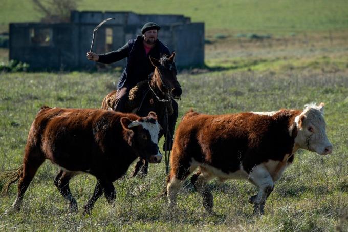 動物權利日漸受到重視 (圖片:AFP)