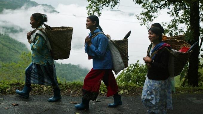美祭制裁令後 伊朗照買印度茶葉成為最大買家。(圖:AFP)
