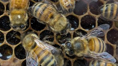 蜜蜂移動定位演算法 (圖片:AFP)
