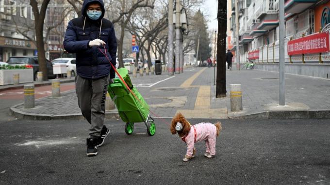 全球首例!毛小孩驗出新冠病毒。(圖片:AFP)