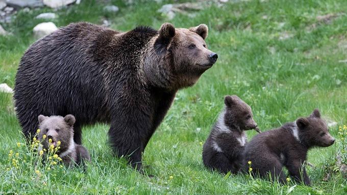 道瓊跌入熊市僅花 19 天,僅次於 1931 年 (15天),創史上第二快入熊市。(圖片:AFP)