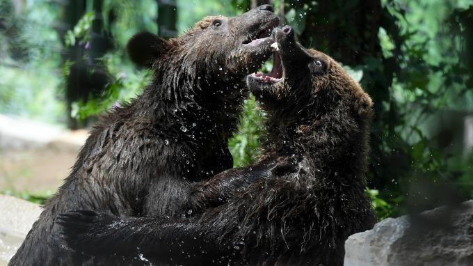道瓊昨日跌至熊市後又跌10%,至 1987 年 10 月股災以來最慘。(圖片:AFP)