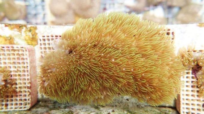 南臺灣產業跨領域創新中心協助新創團隊完成產業化的最後一哩路,催生以皮珊瑚萃取物製成保養品的創新公司「ForCean 風行海洋國際公司」。(風行海洋提供)
