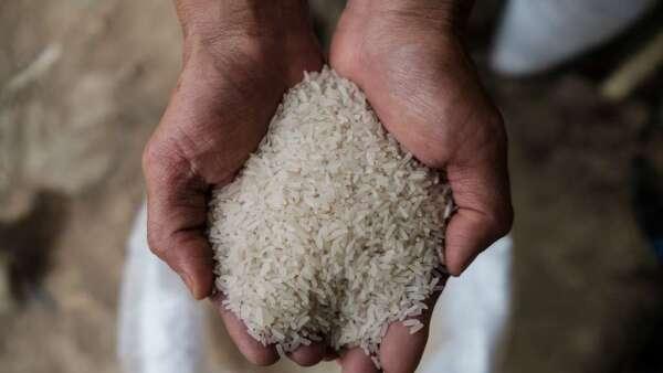 大米價格飆至7年新高 疫情造成出口供應大減(圖:AFP)