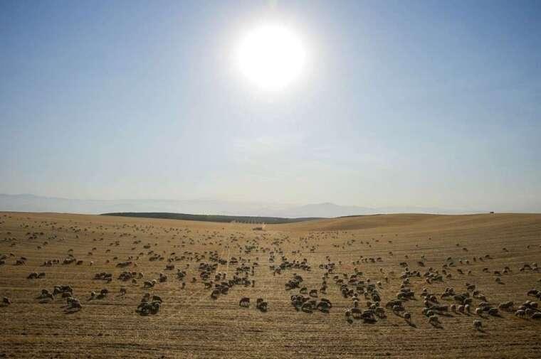 氣候變遷讓乾旱更嚴重 (圖: AFP)