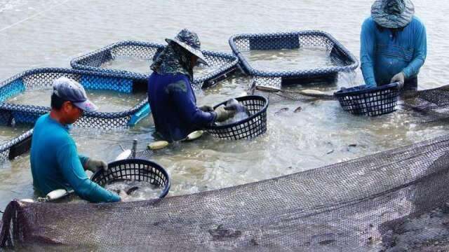 傳統養殖漁業看天吃飯、仰賴大量人力,易遭受天災的侵害。(力佳綠能提供)