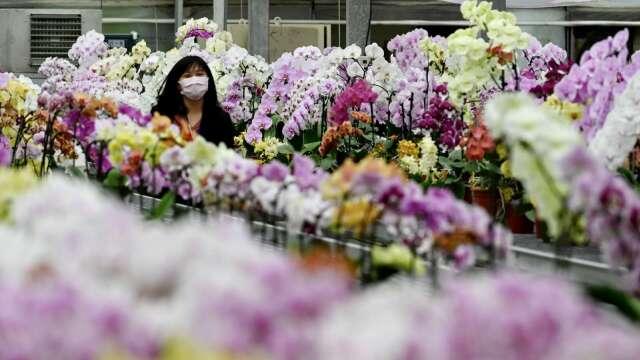 農委會補貼運費搶救花卉產業 華航包艙5/6首航日本。(圖:AFP)