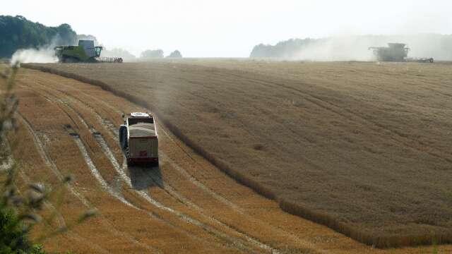 報復澳洲?中國恐將對澳洲大麥課反傾銷稅(圖片:AFP)