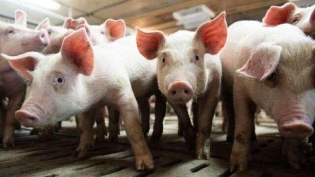 高盛:疫情導致供需失衡 肉價將持續波動   (圖:AFP)