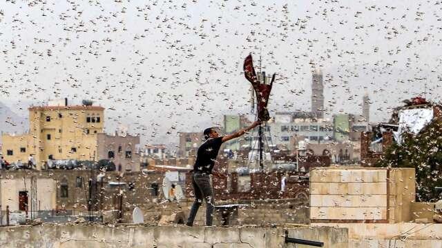 70年來最狂!蝗蟲大軍橫掃非洲 世銀批准史上最高5億美元救助金。 (圖片:AFP)