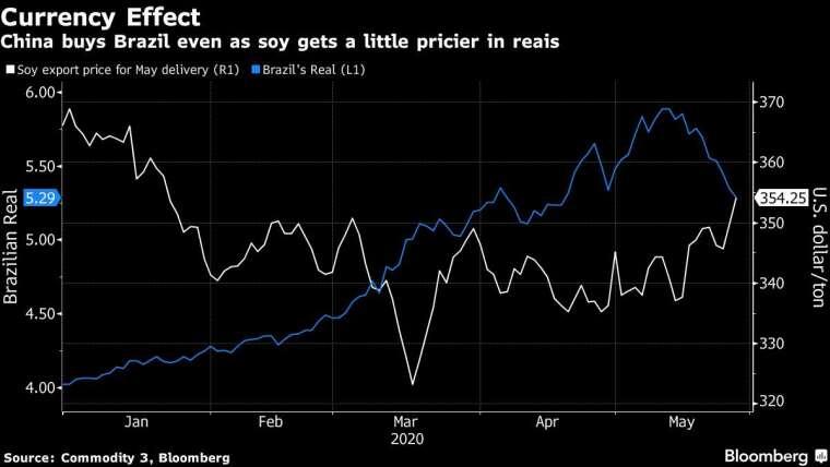 巴西黃豆出口價格 (白) 和巴西里爾匯價 (藍) 走勢圖。(來源: Bloomberg)