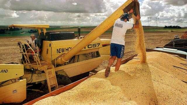 美中緊張加上巴西里爾貶值,據傳促使中國本周向巴西採購黃豆。(圖:AFP)