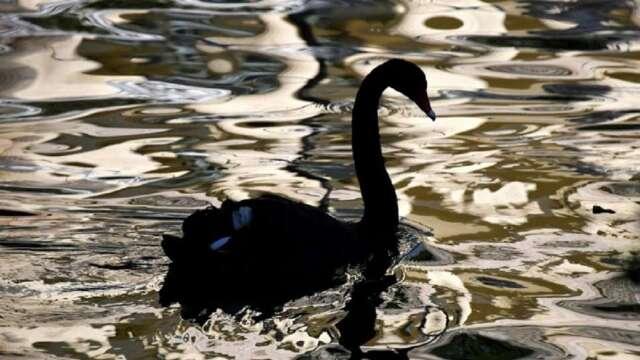 近年來黑天鵝、灰犀牛等事件不斷,市場常呈現劇烈震盪,也因此,講求多元資產靈活配置的基金逐漸受到青睞。(圖:AFP)