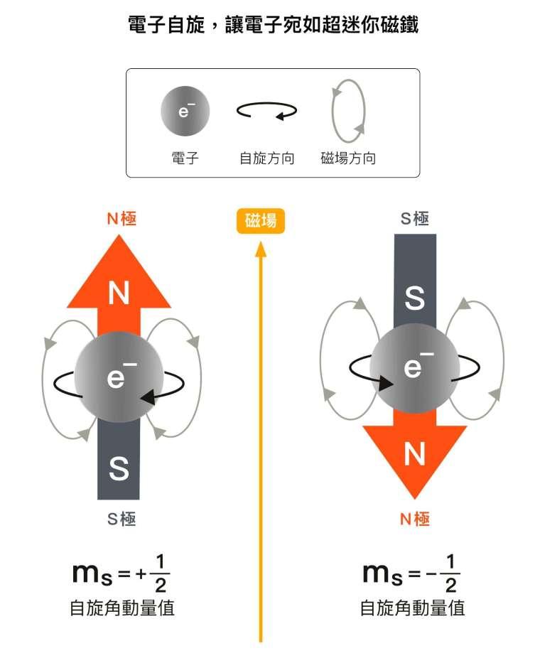電子雖有角動量,卻不能理解成電子真的在轉。因為電子是個體積無限小的粒子,沒有體積,所以不可能轉動,自旋完全是量子力學的概念。而且電子自旋角動量值在磁場中只能是 1/2 或 -1/2 ,沒有其他可能的值,這就是「電子自旋 1/2 」的由來。 圖說設計│黃曉君、林洵安