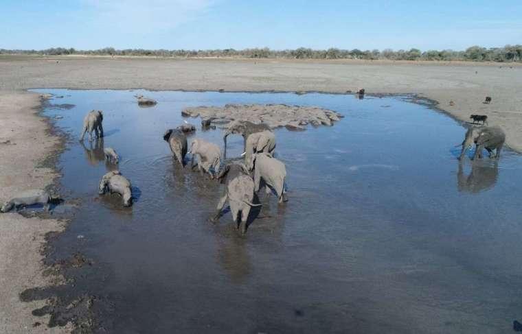 象群尋找水源(圖:AFP)