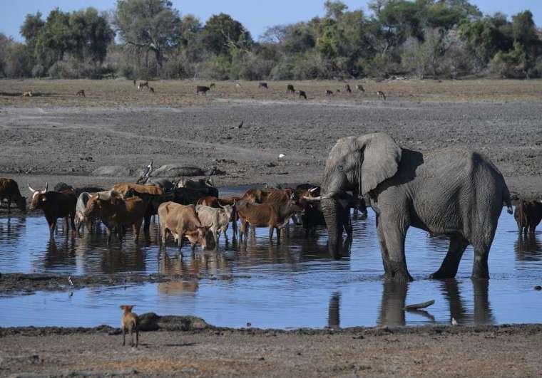 大象死亡問題仍是謎團(圖:AFP)