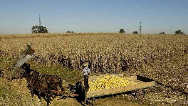 歷史次高!美國農業部:中國單日玉米採購量達近137萬噸 (圖:AFP)