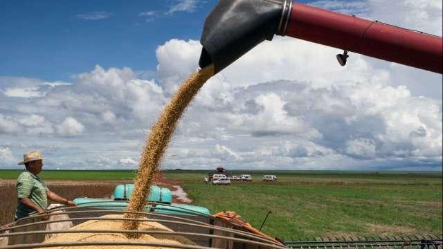 中國6月份黃豆進口量刷新紀錄 主要來自巴西(圖:AFP)