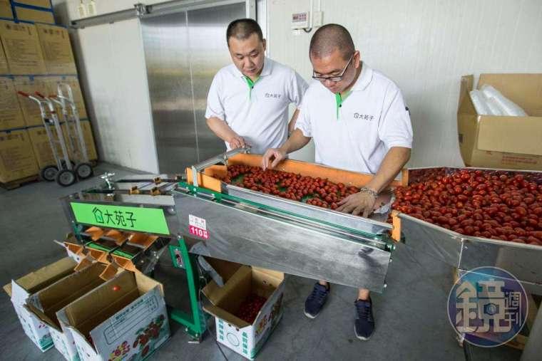 每批水果都經過初步挑選,邱瑞堂 (左) 注重水果安全,從產地到農檢到配送皆層層把關。