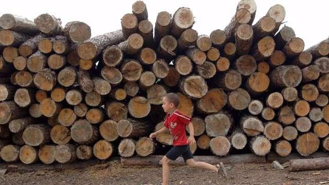 鋒芒蓋過黃金!美國人瘋買木材 期貨價4月來翻漲1倍 (圖:AFP)