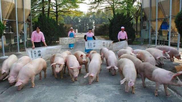 開放美豬美牛進口 農委會:不涉及修法 明年1月1日上路。(圖:台糖提供)
