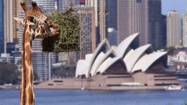 打破近30年紀錄 澳洲確定陷入經濟衰退 澳幣應聲貶 (圖:AFP)