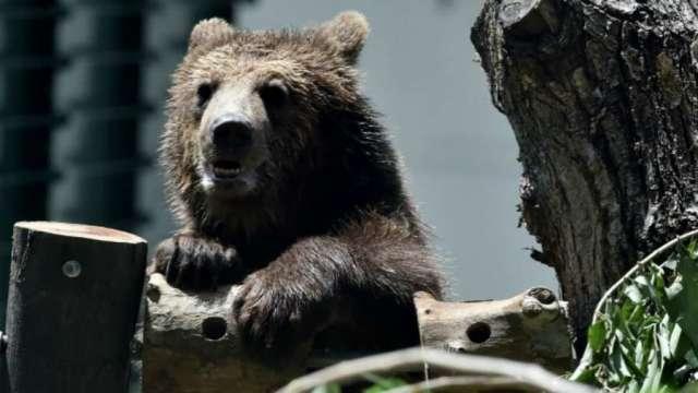 史上最慘!特斯拉單日暴跌21% 直墜熊市深淵。(圖片:AFP)