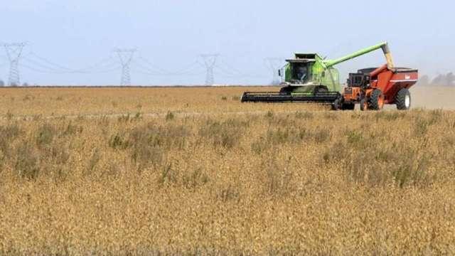 農作物供需緊張恐加劇 糧食危機正要來襲 (圖:AFP)