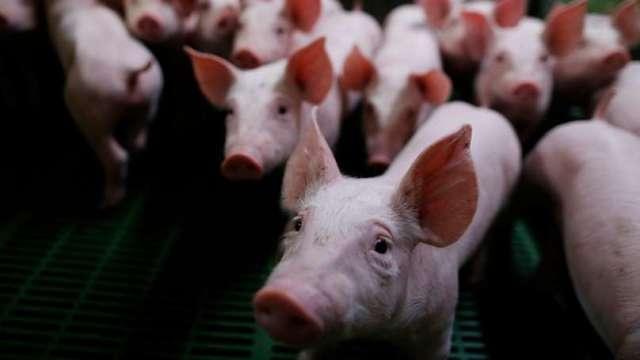 終結23年夢魘 台灣最強「豬隊友」重返國際搶回百億商機。(圖:AFP)