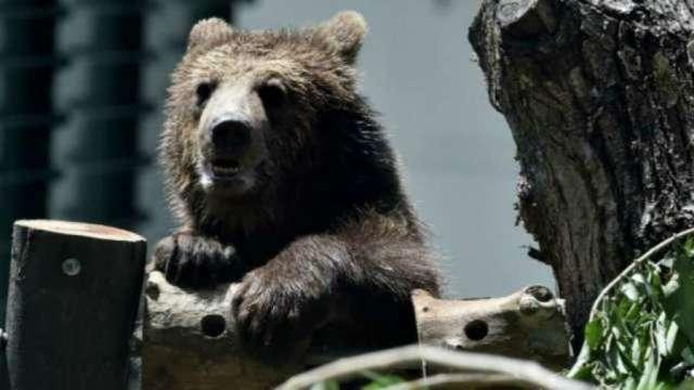 外資仍喊買!阿里巴巴慘遭血洗、墜入熊市。(圖片:AFP)