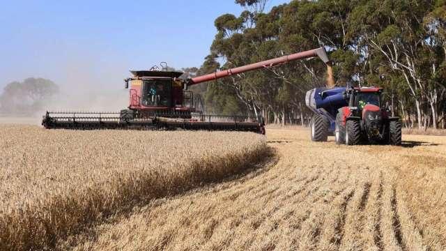 糧食重要性高於政治 澳洲12月出口中國小麥大幅增加(圖:AFP)
