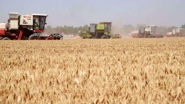 穀物期貨價格下跌 小麥降至1個多月低點(圖:AFP)