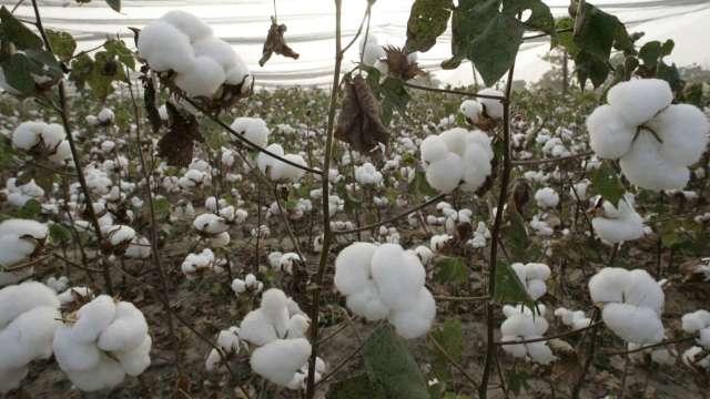 新疆棉花延燒! H&M被消失 遭百度阿里等中國電商「下架」。(圖片:AFP)