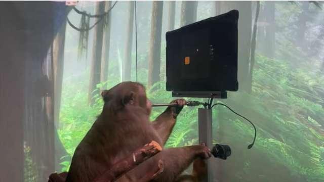 馬斯克大腦晶片新創公司秀成果 猴子單靠大腦打電動 (圖片:AFP)