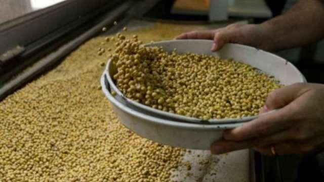 乾旱暴雨接踵而至 氣象專家:黃豆進入關鍵7天採收期(圖:AFP)