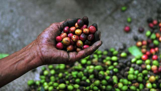 巴西也鬧水荒!水情告急咖啡供需失衡加劇(圖:AFP)