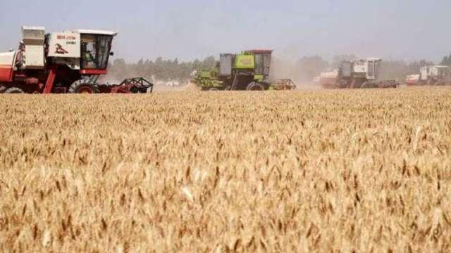 聯合國:全球糧價飆升 創十年最高水平 (圖片:AFP)