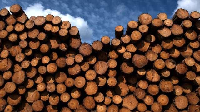 鋸木拉產能+買家延後採購 木材周跌18%創35年紀錄(圖:AFP)