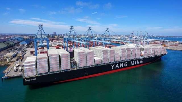 貨櫃三雄遭三大法人提款逾百億元,占賣超總額逾60%。(圖:陽明提供)
